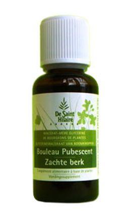 Animaux & Maison: Bouleau pubescent (Betula pubescent) bourgeon