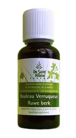 Animaux & Maison: Bouleau verruqueux (Betula verrucosa) bourgeon
