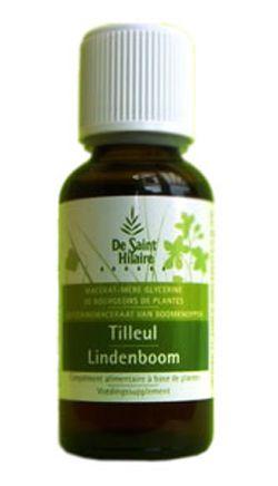 Animaux & Maison: Tilleul (Tilia tomentosa) bourgeon