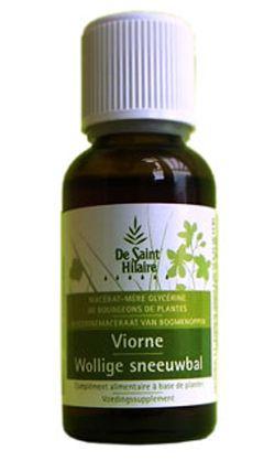 Animaux & Maison: Viorne (Viburnum lantana) bourgeon