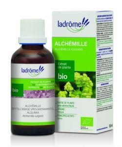 Thérapies naturelles: Alchémille - extrait de plante fraîche