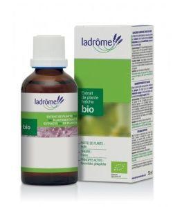 50 +: Basilic - extrait de plante fraîche
