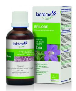Thérapies naturelles: Epilobe - extrait de plante fraîche
