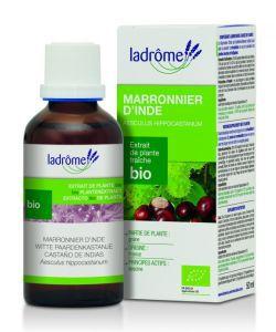 Thérapies naturelles: Marronnier d\'Inde - extrait de plante fraîche