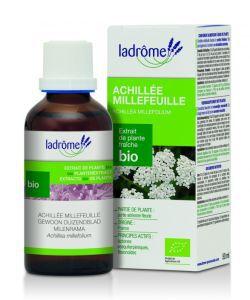 Thérapies naturelles: Achillée millefeuille - extrait de plante fraîche
