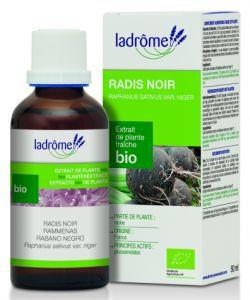 Thérapies naturelles: Radis noir - extrait de plante fraîche