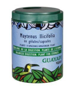 50 +: Maytenus Ilicifolia