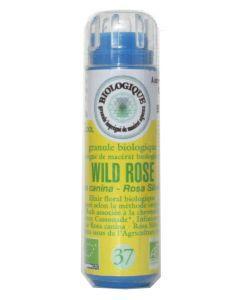Fleurs de Bach: Eglantier/Wild Rose (n°37) SANS ALCOOL