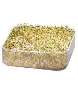 Aliments et Boissons: Etage supplémentaire pour Germoir à étages