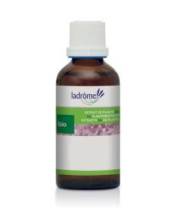 Thérapies naturelles: Romarin - extrait de plante fraîche
