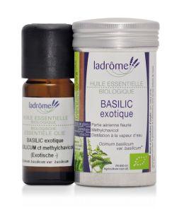 50 +: Basilic exotique (Ocimum basilicum var. basilicum)