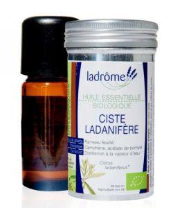 Huiles essentielles: Ciste ladanifère (Cistus ladaniferus)