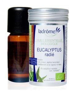 Bien-être Détente: Eucalyptus radié (Eucalyptus radiata)