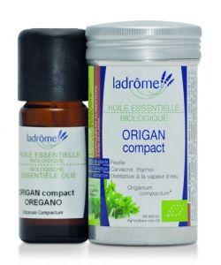 50 +: Origan compact (Origanum compactum)