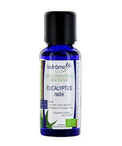 Huiles essentielles: Eucalyptus radié (Eucalyptus radiata)