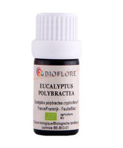 Bien-être Détente: Eucalyptus à bractées multiples