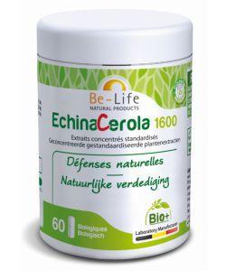 Les incontournables: EchinaCerola 1600