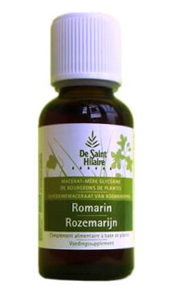 Romarin (Romarinus officinalis) bourgeon