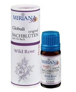 Eglantier - Wild rose 37 Fleur de Bach pour animaux, 10g