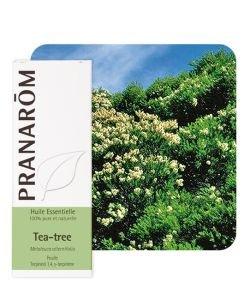 Tea-tree (Melaleuca alternifolia)
