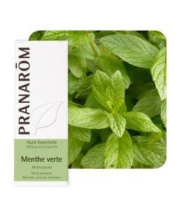 Menthe verte - nana (Mentha spicata)