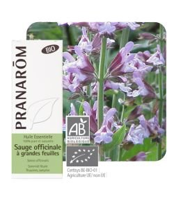 Sauge officinale à grandes feuilles (Salvia officinalis)