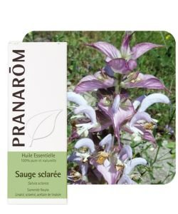 Sauge sclarée (Salvia sclarea) - Huile essentielle