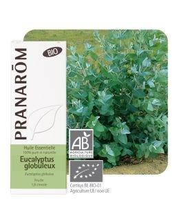Eucalyptus globuleux (Eucalyptus globulus) - Huile essentielle