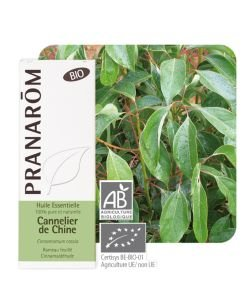 Cannelier de Chine (Cinnamomum cassia)
