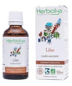 Lilas (syringa vulgaris) - bourgeons frais