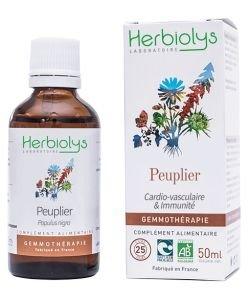 Peuplier noir (populus nigra) - bourgeons frais BIO, 50ml