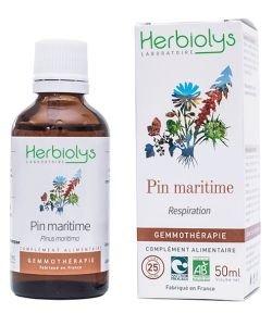 Pin maritime (pinus maritima) - bourgeons frais BIO, 50ml