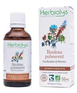 Bouleau pubescent (Betula pubescent) - bourgeons frais