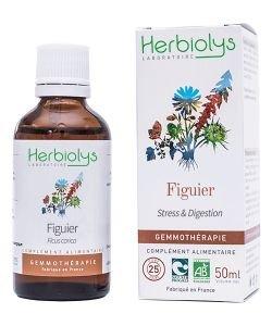 Figuier (Ficus carica) - bourgeons frais BIO, 50ml