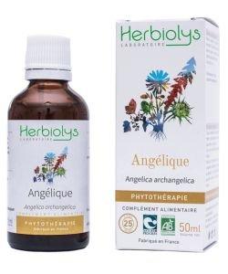 Angélique (Angelica archangelica) - Mâcérat de plantes fraîches