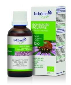 Echinacée pourpre - extrait de plante fraîche BIO, 50ml