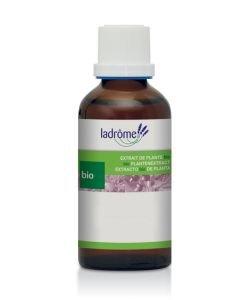 Bouleau blanc - extrait de plante fraîche BIO, 50ml