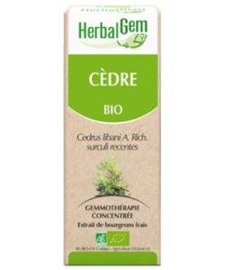 Cèdre (Cedrus libani) bourgeon BIO, 50ml