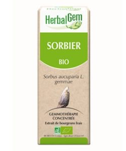 Sorbier (Sorbus aucuparia) bourgeon BIO, 50 ml