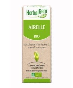 Airelle (Vaccinium V.I.) bourgeon
