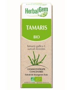 Tamaris (Tamarix gallica) bourgeon BIO, 50 ml