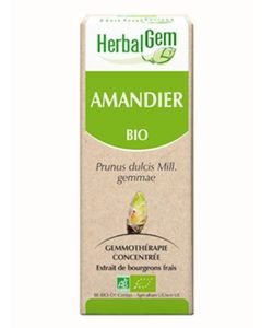 Amandier (Prunus amygdalus) bourgeon BIO, 15ml