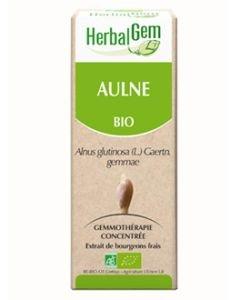 Aulne (Alnus glutinosa) bourgeon