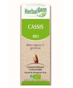 Cassis (Ribes nigrum) Bourgeon