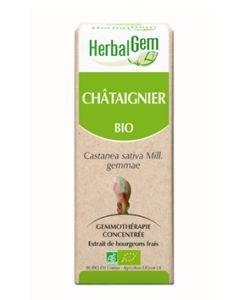 Châtaignier (Castanea vesca) bourgeon BIO, 15ml