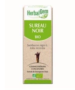 Sureau noir (Sambucus Nigra) bourgeon