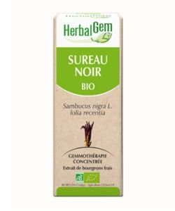 Sureau noir (Sambucus Nigra) bourgeon BIO, 15ml