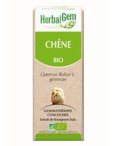 Chêne (Quercus robur) bourgeon BIO, 15ml
