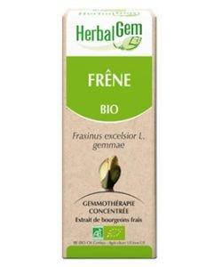 Frêne (Fraxinus excelsior) bourgeon BIO, 15ml