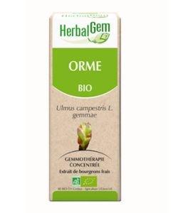 Orme (Ulmus Campestris) bourgeon BIO, 15ml
